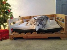 Dog Bed out of Recycled Wooden Pallets