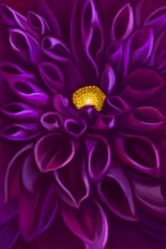 Purple Dahlia by Yvonne Raftery, via Flickr