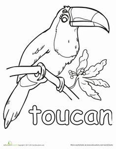 Kindergarten Animals Worksheets Toucan Coloring Page