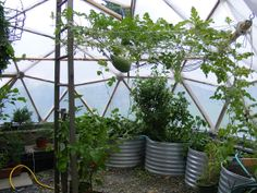 Overhead support for vines add space to greenhouse