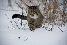 Five ways to look after your cat in the cold weather