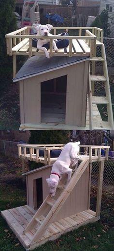 Idea para el Hogar de su Perro