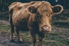 """Discover 100 funny French idioms that""""ll help you sound more French! With audio recorded by a professional French voice actor. Cow Pictures, Pictures Images, Hd Photos, Free Pictures, Ghost And Ghouls, Funny French, Struggle Is Real, Like A Local, Idioms"""