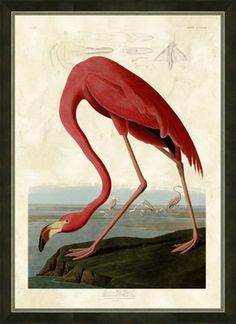 Audubon, Flamingo - Art - Sale by Category - Sale | One Kings Lane