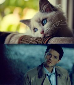 this pretty much sums it up. Castiel, you beautiful, beautiful man.