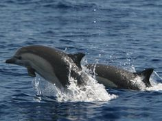 Magical Dolphin - swim with dolphins, individual dolphin & whale ...