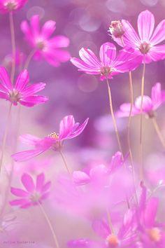 by Julia Gusterina on Purple Flowers Wallpaper, Flower Background Wallpaper, Flower Backgrounds, Amazing Flowers, Beautiful Roses, Pretty Flowers, Pink Flowers, Beautiful Landscape Wallpaper, Beautiful Flowers Wallpapers