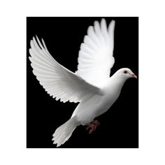 Free religious desktop background images and Christian PPT template... ❤ liked on Polyvore