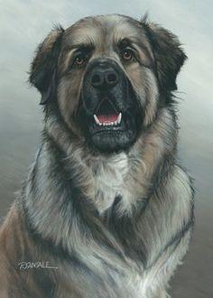 2013 Rescued Heroes Calendar Dogs