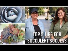 How to Make a Succulent Sphere - YouTube