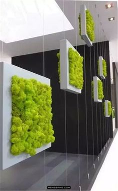 A Vertical Garden With Distinctive Sophistication