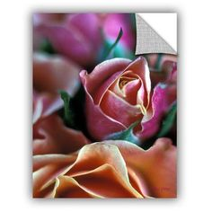 ArtWall ArtApeelz Mauve And Peach Roses by Kathy Yates Photographic Print on Canvas Size: