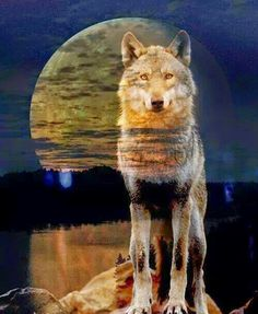Wolf on a FullMoon Beautiful Wolves, Animals Beautiful, Cute Animals, Wolf Photos, Wolf Pictures, Illustration Fantasy, Native American Wolf, Wolf Artwork, Wolf Painting