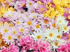 fiori - Cerca con Google