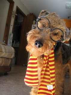 OMG! Must love Airedales