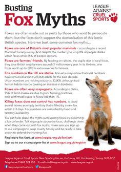 Fox facts, pet fox a red fox. Animal Spirit Guides, Spirit Animal, Fox Facts For Kids, Fox Tattoo Meaning, Fox Quotes, Animal Activities For Kids, Fox Spirit, Pet Fox, Animal Magic
