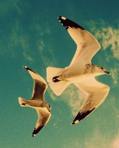 Flying Seagulls Fine Art Print Beach photography wall by soulfuse #fpoe