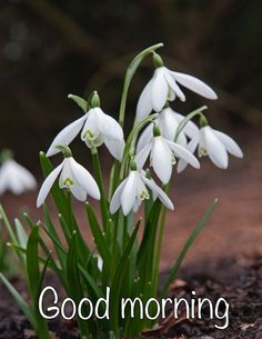 Top 35 Most Beautiful White Flowers with Pictures - Garden Types Garden Types, Winter Flowers, Wild Flowers, Snow Drops Flowers, Early Spring Flowers, Fruit Garden, Garden Plants, Types Of White Flowers, Green Flowers