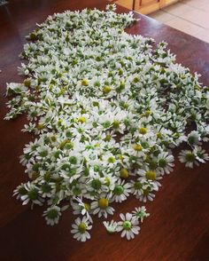 We harvest this many camomile flowers out of a single 2sq ft grow box every day! Healthy and well fed plants are happy plants and they will show you how happy they are by making YOU happy!. #verticalfarming #urbanfarming #organicfarming #food #agricultur