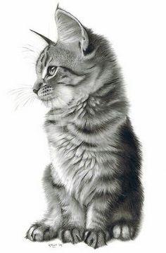 Hermoso gatito.  - Liliana V. - Google+