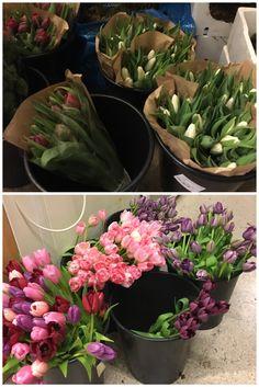 My Flower, Flowers, Succulents, Plants, Succulent Plants, Plant, Royal Icing Flowers, Flower, Florals