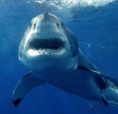 Shark Week: Five Ocean-Themed Video Games to Celebrate the Great Week Under the Sea Orcas, Largest Great White Shark, Shark Bait, Shark Fish, Megalodon, Deep Blue Sea, Shark Week, Ocean Life, Sea Creatures