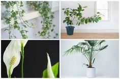 Najzdravije biljke za vaš dom
