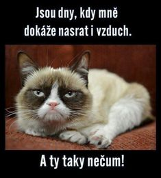 Super Funny Sayings And Quotes Humor Grumpy Cat Ideas Funny Sign Fails, Funny Couples Memes, Super Funny Quotes, Funny Quotes For Teens, Funny Sayings, Funny Baby Photography, Funny Supernatural Memes, Relationship Jokes, Work Jokes