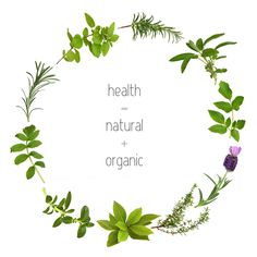 This article is about the healing scents and other benefits of essential organic oils , healthy Organic drinks and foods at Nature's Corner, Calabash, NC Writing A Research Proposal, Nursing Research, Healthy Recipe Videos, Organic Essential Oils, Healthy Sides, Healthier You, Organic Oil, Start Up Business, Health Motivation