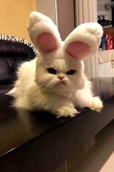 Happy Easter m - your daily dose of funny cats - cute kittens - pet memes - pets in clothes - kitty breeds - sweet animal pictures - perfect photos for cat moms Cute Animal Memes, Cute Animal Photos, Cute Funny Animals, Funny Animal Pictures, Funny Cats, Animal Humor, Cats Humor, Animal Quotes, Funny Cat Pics
