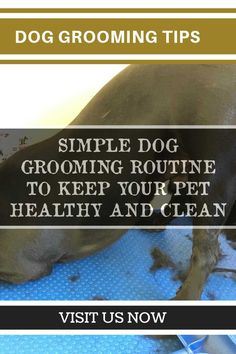Taking Care of Your Pet - Dog Grooming Tips >>> You can get more details by clicking on the image. #DogWash #doggroomingtips Dog Clippers, Dog Grooming Tips, Learn From Your Mistakes, Pet Dogs, Pets, Dog Wash, Kinds Of Dogs, Service Dogs, Dog Owners