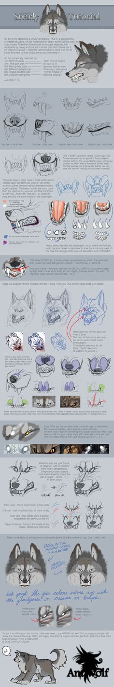 wolf tutorial by Anuwolf via deviantart.Snarling wolf tutorial by Anuwolf via deviantart. Drawing Techniques, Drawing Tips, Drawing Tutorials, Art Tutorials, Anatomy Reference, Drawing Reference, Animal Drawings, Art Drawings, Wolf Drawings