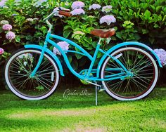 Turquoise Beach Cruiser amongst the pink, lavender and blue hydrangeas. For more information please see my profile. Thank you!     See THESE beautiful photos of turquoise beaches & more. Check THIS Out & the latest Videos, Tips & Trends in Photography @ http://www.photopinns.com