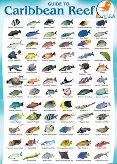 Infografías de peces 34