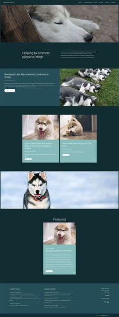 11 best Breedpost website templates images on Pinterest