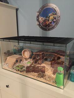 Diy Hamster Toys, Cool Hamster Cages, Gerbil Cages, Hamster Life, Hamster Habitat, Baby Hamster, Hamster House, Dwarf Hamster Cages, Terrarium