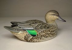 Green-winged Teal Hen