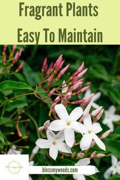 Adding plants to your home creates a healthy and happy home environment. What if you could add plants to your home that smell heavenly? Well, you can and if you read this post, you will learn about fragrant indoor and outdoor plants that smell heavenly. #plantsforyourhouse #houseplants #fragrantindoorplants #blessmyweedsblog Full Sun Landscaping, Farmhouse Landscaping, Window Plants, Hanging Plants, Backyard Plants, Outdoor Plants, Landscape Curbing, Kitchen Plants, Good Day Sunshine