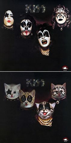 Classic Album Covers Recreated With Cats http://ibeebz.com