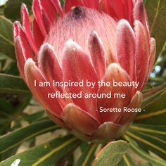 Be inspired by the beauty around you Reflection, Inspired, Plants, Inspiration, Beauty, Biblical Inspiration, Plant, Beauty Illustration, Inspirational