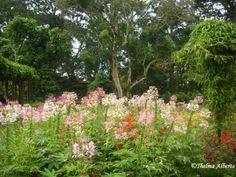 Amazing Eden Nature Park And Resort, Davao City, Philippines