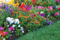 Flower Bed Designs On Pinterest