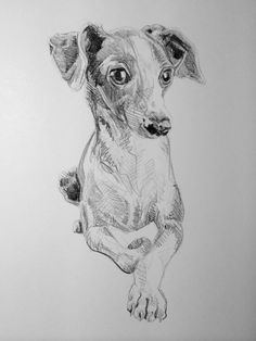 Day #26 - Graphite on card by Lucy Wilson, New Zealand…