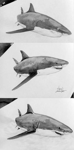 watercolor great white shark - TonAraujo