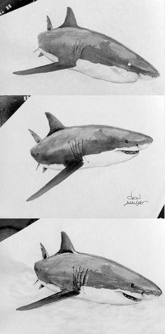 watercolor great white shark - TonAraujo