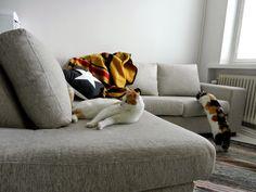 59m2: uusi sohva