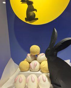 #usagi rabbit  #manju