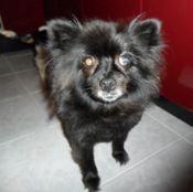 Bella Rose Bella Rose, Rescue Dogs, Animals, Animales, Animaux, Animal, Animais