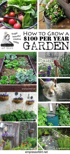 How to grow a thriving garden - flowers and vegetables - on just $100 per year - read the tips here