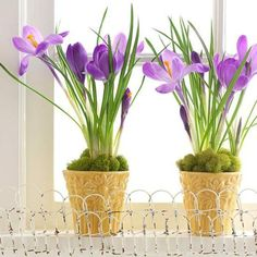 25 Green Ideas for Spring Decorating with Containers for Growing ...